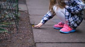 一个女孩在庭院发现了一只蝴蝶,设法采取在她的手上的一只昆虫 4K缓慢的mo 影视素材