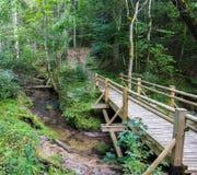 一个小木桥的美丽的景色在一条小河的在森林里在戈雅国家公园在拉脱维亚 免版税库存图片
