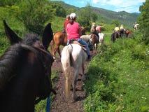 一个小组游人去在一次马骑术旅行的马术在阿尔泰山旅行夏天2018年 库存图片