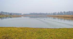 一个有雾的湖的边缘有芦苇的在阳光下 免版税库存照片