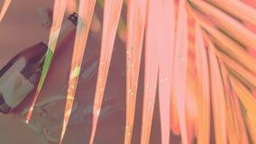 一个瓶香槟和玻璃在热带植物时髦珊瑚花背景  多重曝光 免版税库存照片