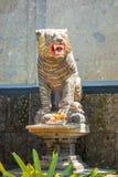 一个老虎雕象在巴厘岛印度尼西亚 库存图片