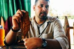 一位地方烟草农夫在Vinales,古巴显示烟草叶子 免版税库存图片
