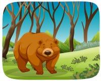 一头北美灰熊在森林里 皇族释放例证