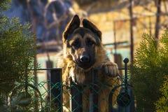 一条哀伤的狗等待他的大师 免版税库存图片