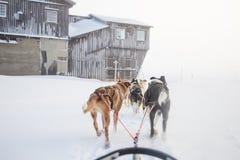 一条美丽的六条狗倒出拉扯雪撬 从坐拍的照片在雪撬透视 乐趣,在北部的健康冬季体育 免版税库存图片