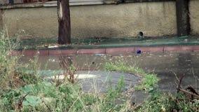 一条街道的看法有植被的在与雷和雨声音的一场重的暴雨 影视素材