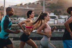 一起训练在早晨的小组赛跑者 图库摄影