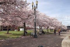 享受一个晴朗的春日的人们在海滨公园 图库摄影