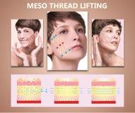 二羟基丙二酸螺纹推力 有干净的新鲜的皮肤的年轻女性 美丽的妇女 面孔和脖子 库存图片