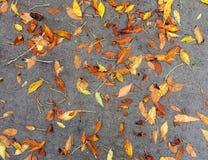 五颜六色的秋叶背景在边路的 免版税库存图片