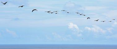 从寻找海岛灯塔上面的概略的看法  免版税图库摄影