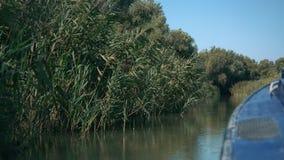 从小船航行的特写镜头视图在多瑙河三角洲的芦苇附近在维尔科沃,乌克兰  股票录像
