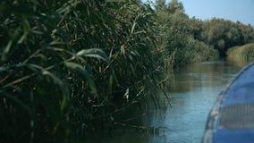 从小船航行的特写镜头视图在多瑙河三角洲的芦苇附近在Vilkove,乌克兰  股票视频