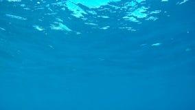 从浮出水面的轻潜水员的一个看法从水下面 影视素材
