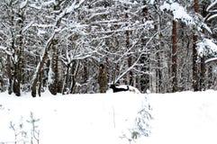 伪装的一个人遛狗的在森林边缘 免版税库存图片