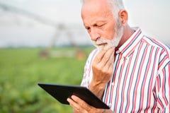 使用在大豆领域时的一种片剂冥想严肃的资深的农艺师或的农夫,当 在背景中弄脏的灌溉系统 图库摄影