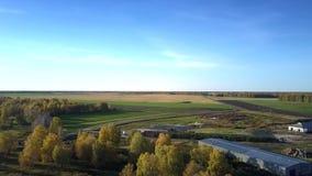 俯视图在领域和森林中的家畜复合体 股票视频