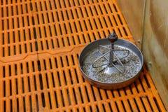 Äckel-matning för spädgris Royaltyfri Foto