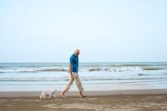 Ägare med den maltesiska hunden som går på stranden royaltyfri foto