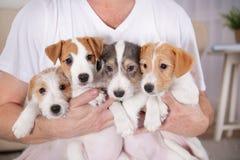 Ägare med hemmastadd gullig rolig hundkapplöpning, royaltyfria bilder