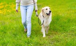 Ägare och lycklig golden retrieverhund på gräset arkivfoton