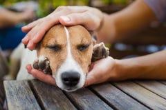 Ägare som daltar hunden royaltyfria bilder