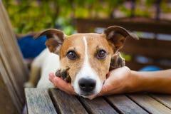 Ägare som daltar hunden Royaltyfri Foto