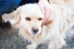 Ägare som försiktigt smeker hennes hund royaltyfria bilder