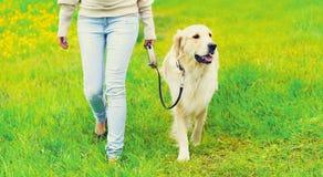 Ägare som går med golden retrieverhunden på koppeln i sommar royaltyfri foto