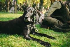 Ägare som rymmer hans hund, tysk shorthaired pekare för brun jakt som är kurzhaar, Arkivbilder