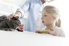 Ägare som ser den ryska blåa katten på säng i veterinär- klinik royaltyfri fotografi