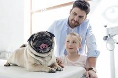 Ägare som ser mops på säng i veterinär- klinik fotografering för bildbyråer