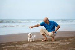 Ägare som spelar med den maltesiska hunden royaltyfri bild