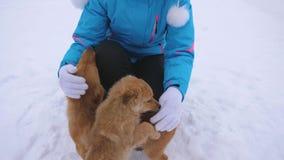 Ägaren smeker hundkapplöpning på vinter går Den moderhunden och valpen går på vit snö med den lyckliga flickan på frostig dag Kvi arkivfilmer