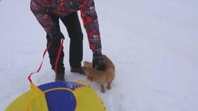 Ägaren smeker hundkapplöpning på vinter går Den moderhunden och valpen går på vit snö med lyckligt M n på frostig dag man lager videofilmer