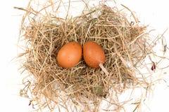 Ägg är i redet Arkivbilder