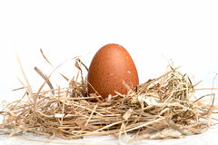Ägg är i redet Arkivbild