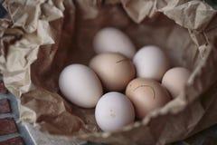 ägg brukar nytt Arkivbild