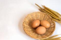 Ägg för ägg tre i korg Arkivbild