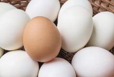 Ägg för Closeupbrunthöna på högen av det vita andägget på wood korgbakgrund Arkivfoto