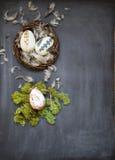 Ägg för påsk royaltyfri fotografi