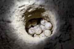 Ägg för sköldpadda för grönt hav i sandhål på en strand Royaltyfri Bild