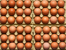 Ägg fega ägg som bakgrundsslut upp makro Royaltyfria Bilder