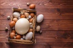 Ägg från olika fåglar, ställe för att uttrycka arkivbild