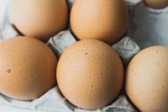 Ägg i äggpapperspanel Royaltyfri Bild