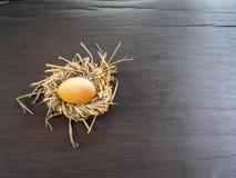 Ägg i bygga bo arkivfoton