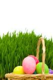 Ägg i den isolerade korgen och gräset Arkivfoton