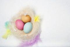 Ägg i det dekorerade redet med fjädrar och Arkivbilder