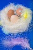 Ägg i det dekorerade redet med fjädrar och Royaltyfri Bild